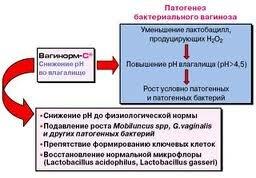 Вагинальный кандидоз патогенез лечение